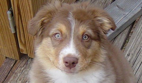 Royal as a Puppy