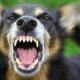 Dog Attack Blyth Uk