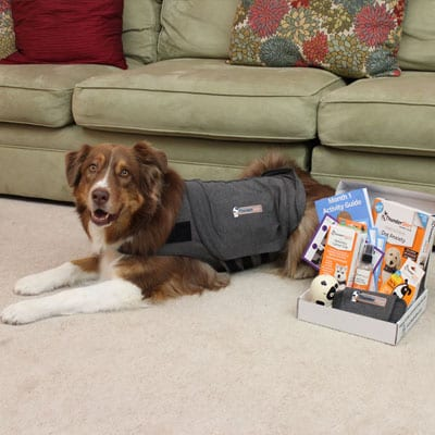 Calm Dog in a Box with ThunderShirt