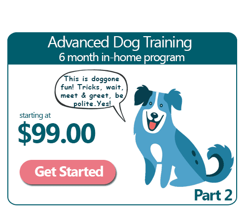 6 Month Advanced In-Home Dog Training Program