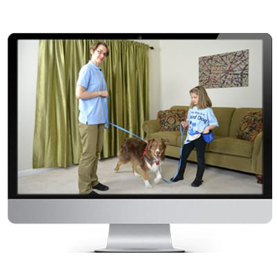 Good Dog Training Videos