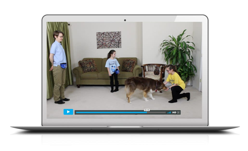 Family Friendly Online Dog Training Video Library
