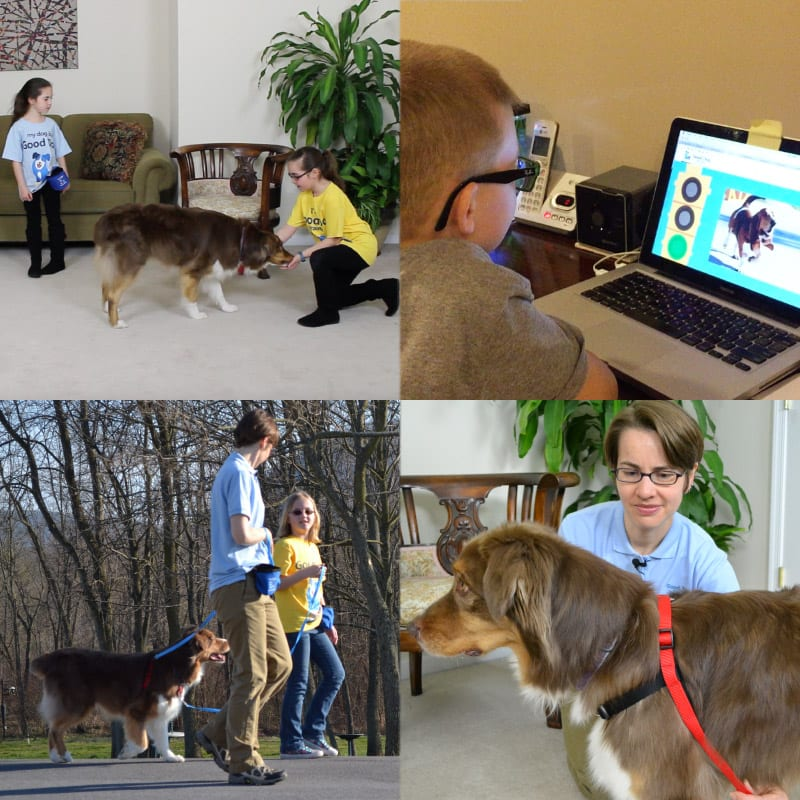 Good Dog Training Program for Families
