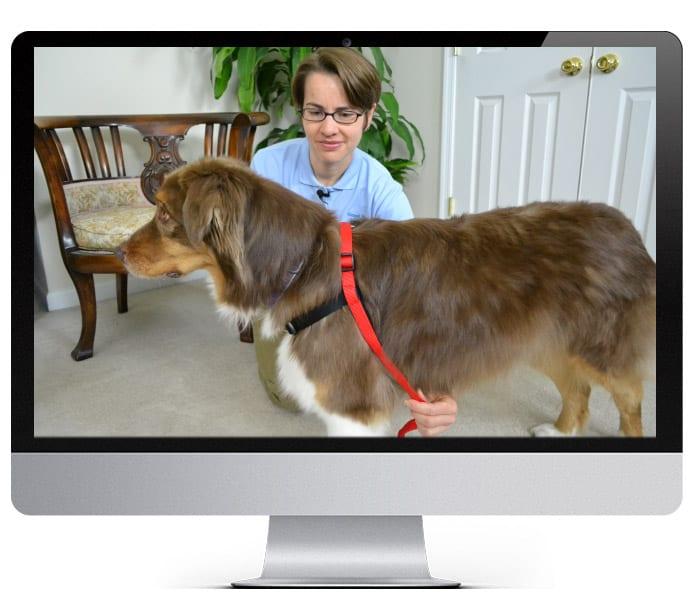 Reward Based Dog Training Tools