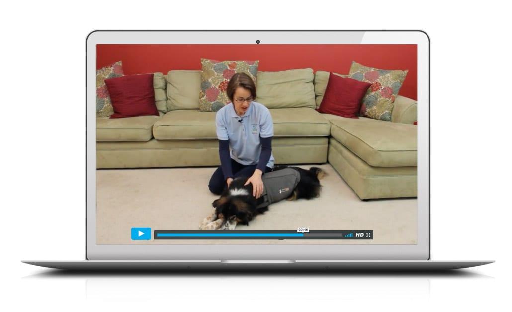 Tellington TTouch Videos for Companion Animals