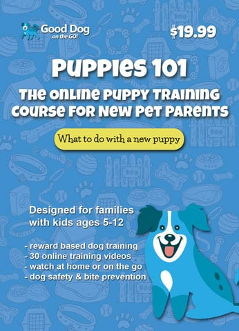 Puppies 101 Puppy Training