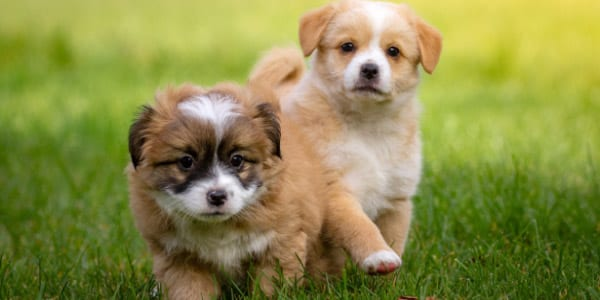 Puppy Play & Development